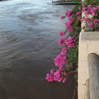 river-with-flowers
